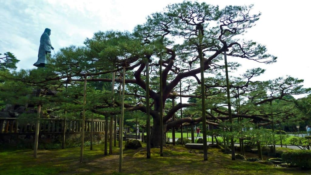 Черная сосна Карасаки Матсу, парк в Японии