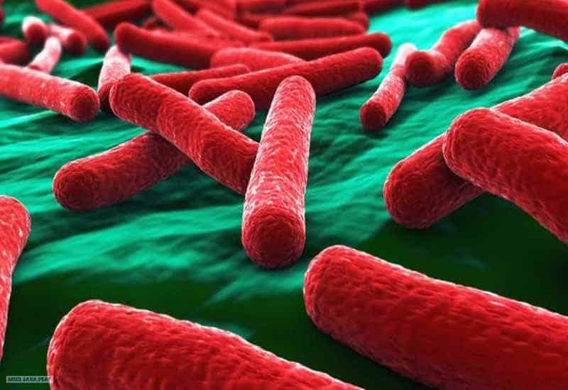 Картинки по запросу светящиеся бактерии радиоактивность
