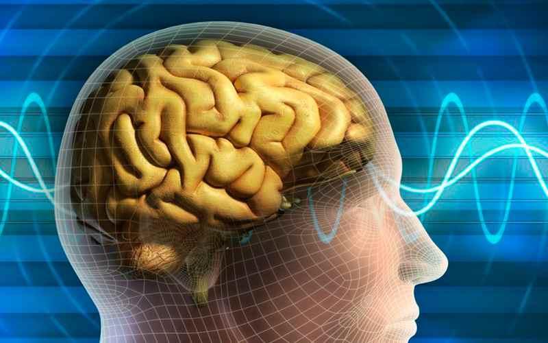 Мозг и сон