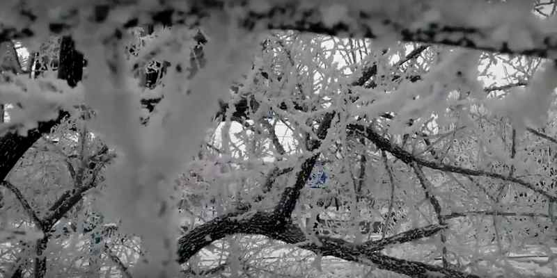 Снег заглушает и изменяет звуки