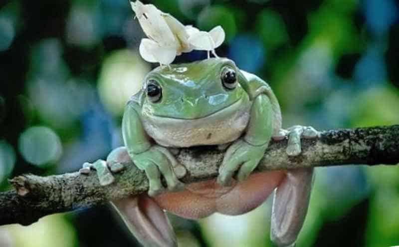 Богомол на лягушке