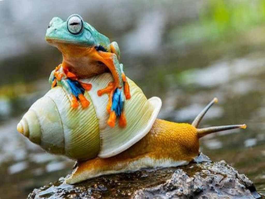 Красивая лягушка на улитке