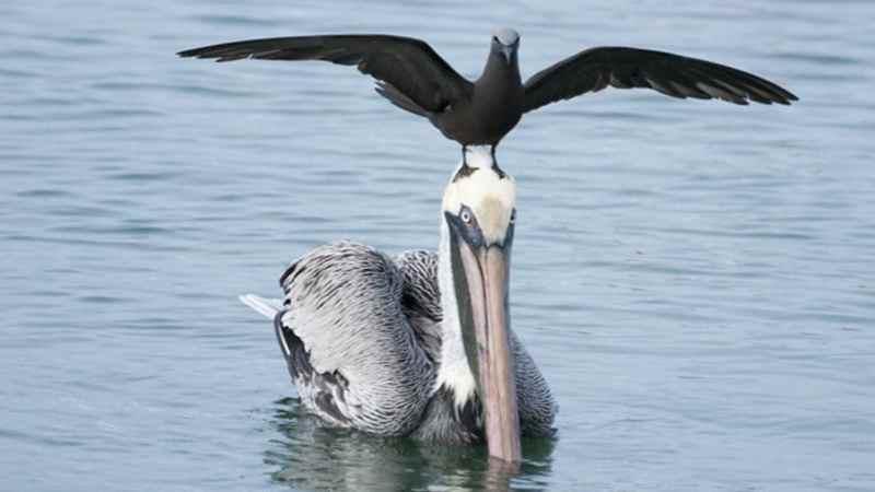 Две птицы рыбачат