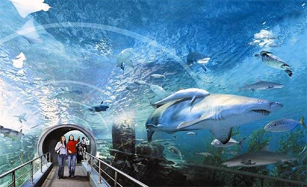 Аквариум Siam Ocean World