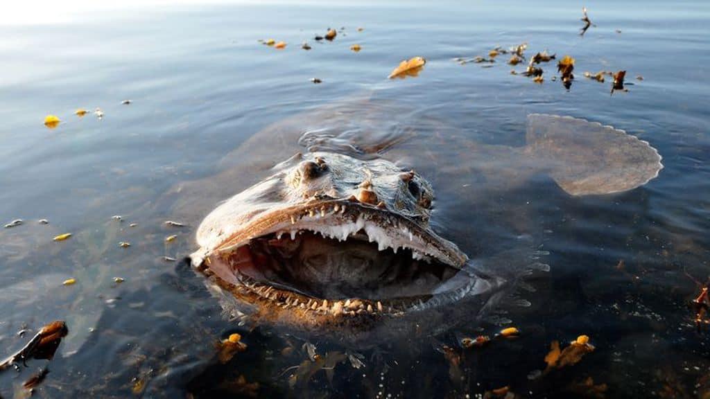 Морской черт