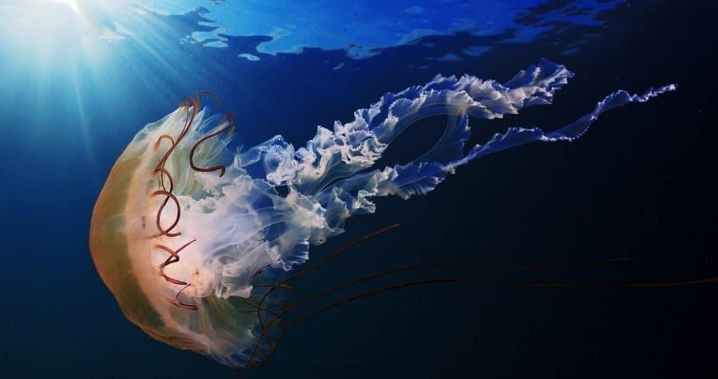 Интересные факты из жизни медуз