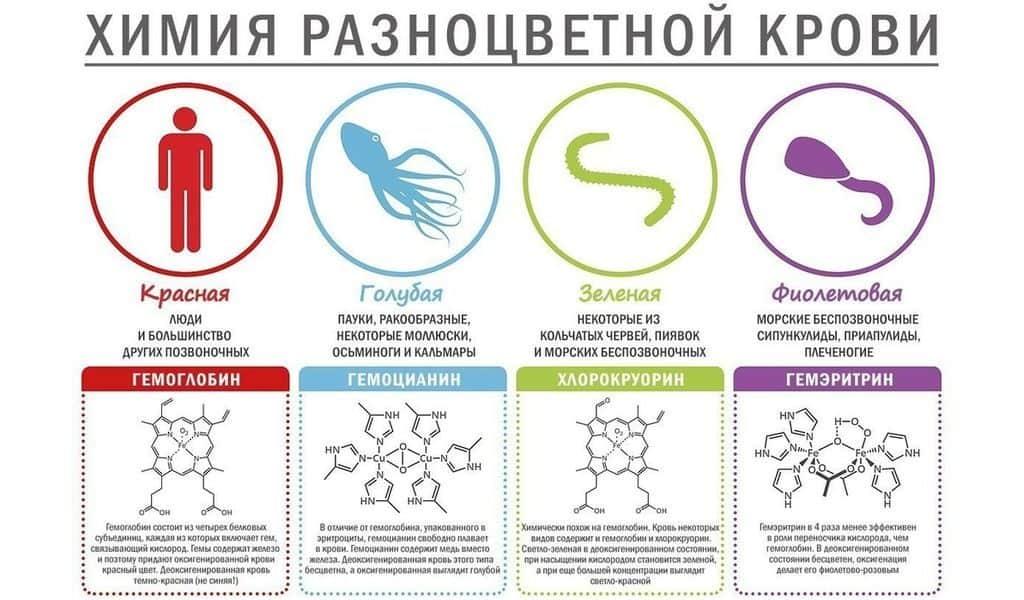 Состав крови животных
