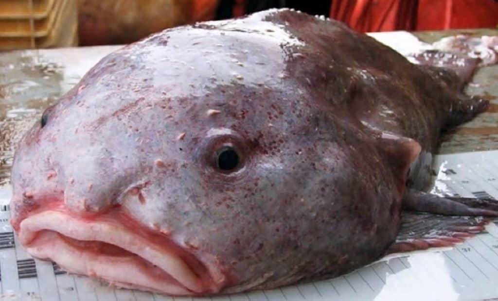 Удивительная рыба капля