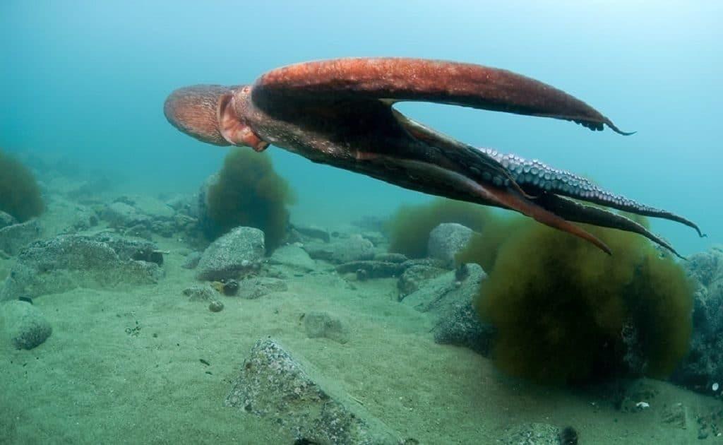 Чернила кальмара