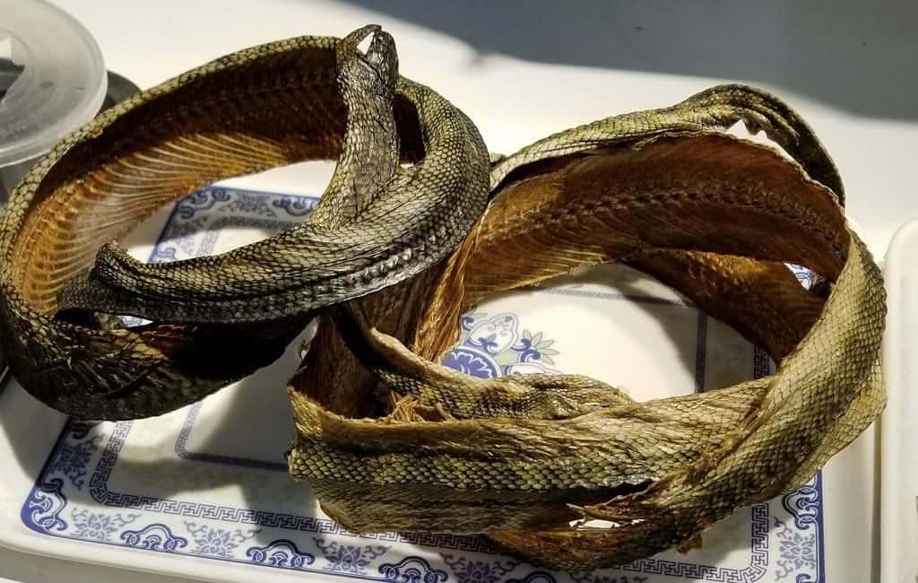 Змеи в китайской кухне
