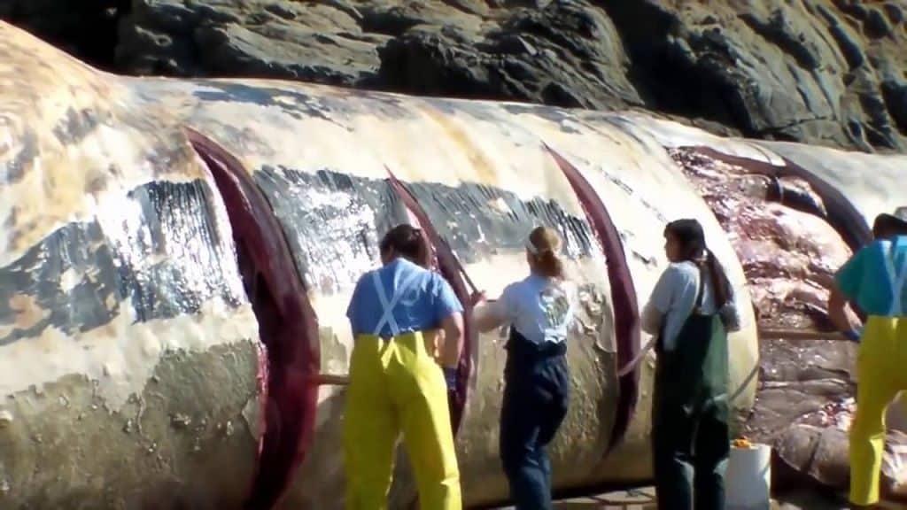 Мясо синего кита