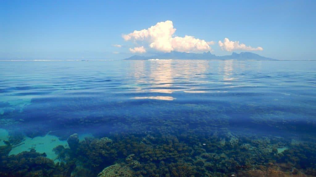 Прозрачные воды Саргассова моря