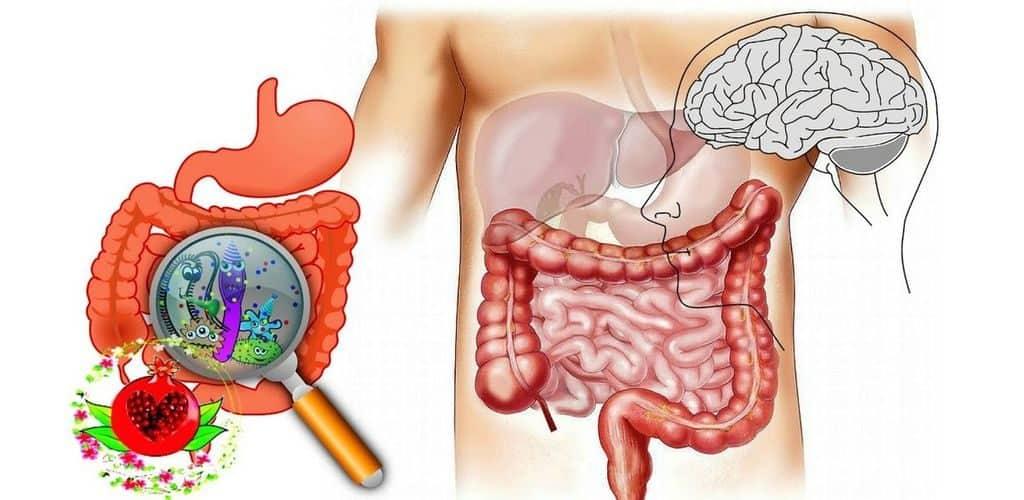 Бактерии в пищеварительной системе