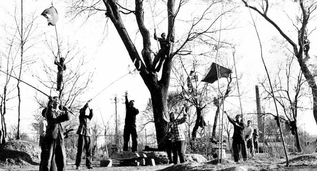 Истребление воробьев в Китае
