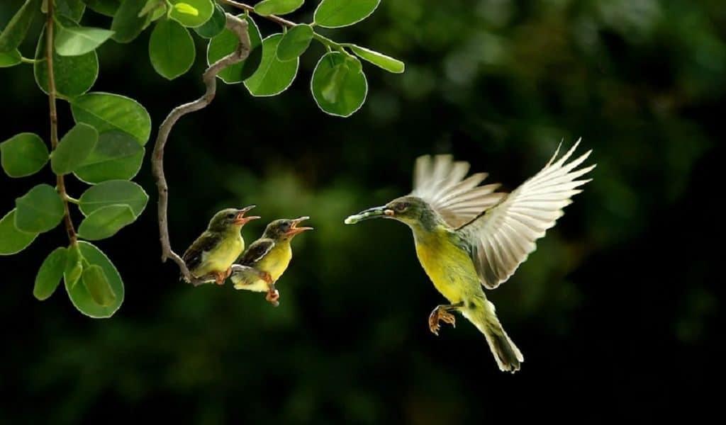 Колибри с птенцами