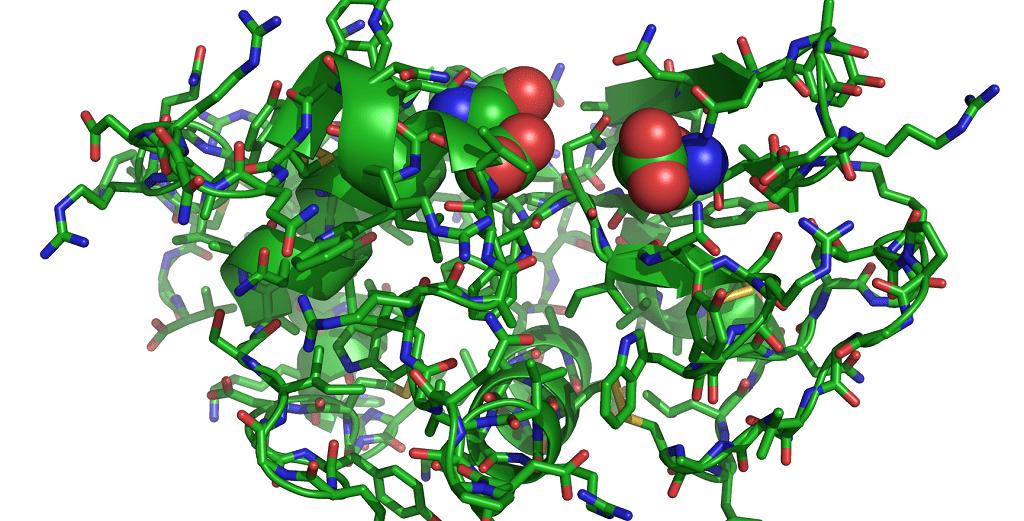 Сложный белок