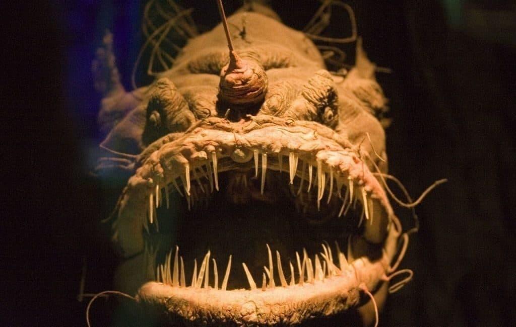 Глубоководные рыбы океанов