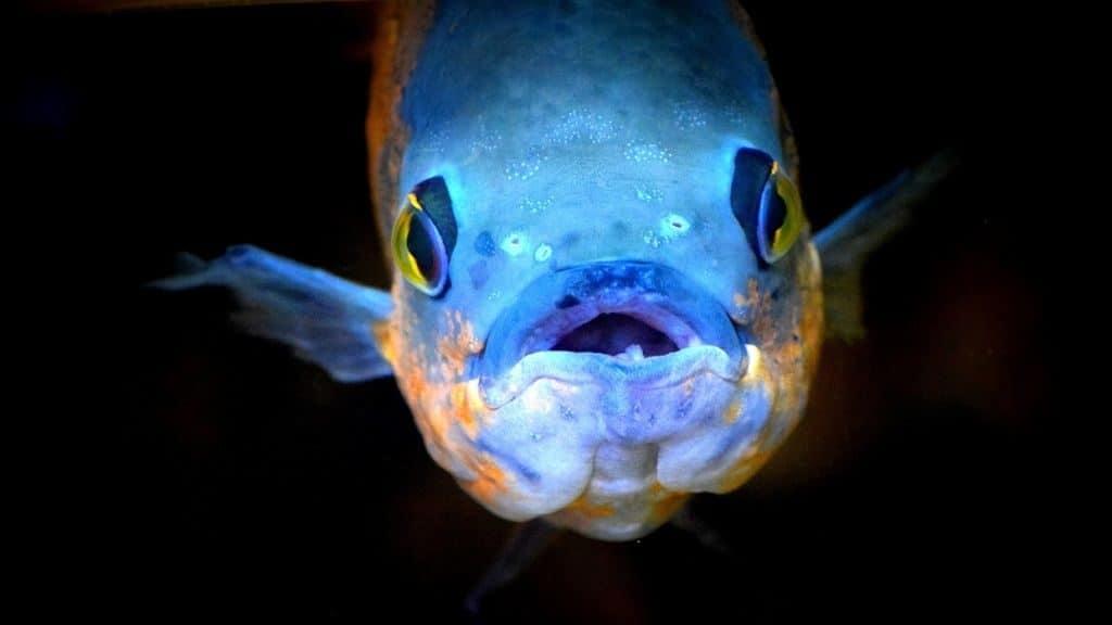 Описание глубоководных рыб