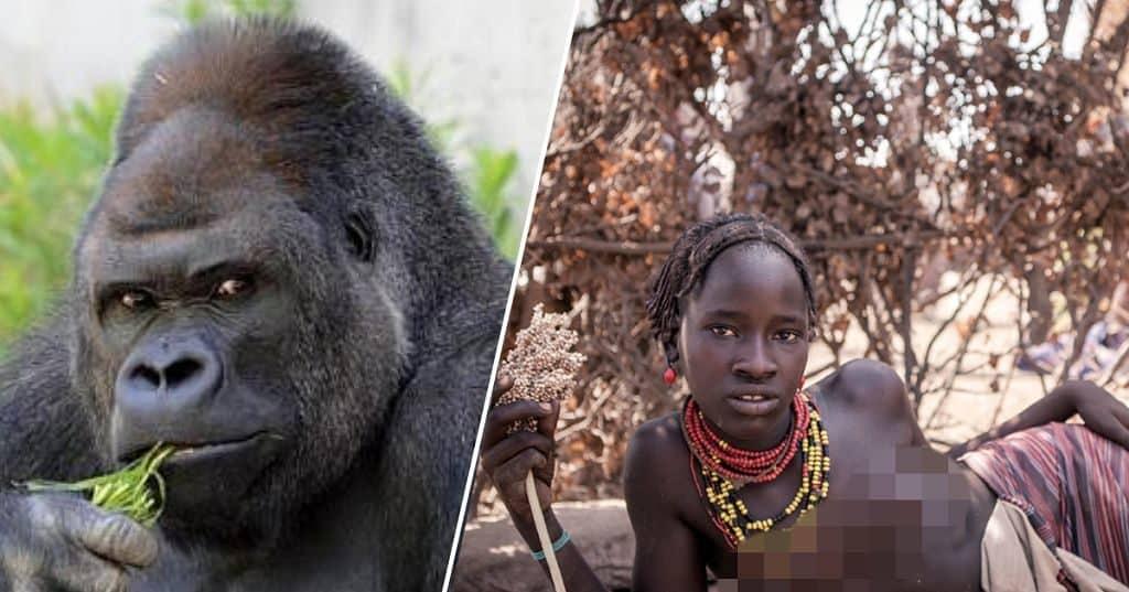 Ночь с самцом гориллы