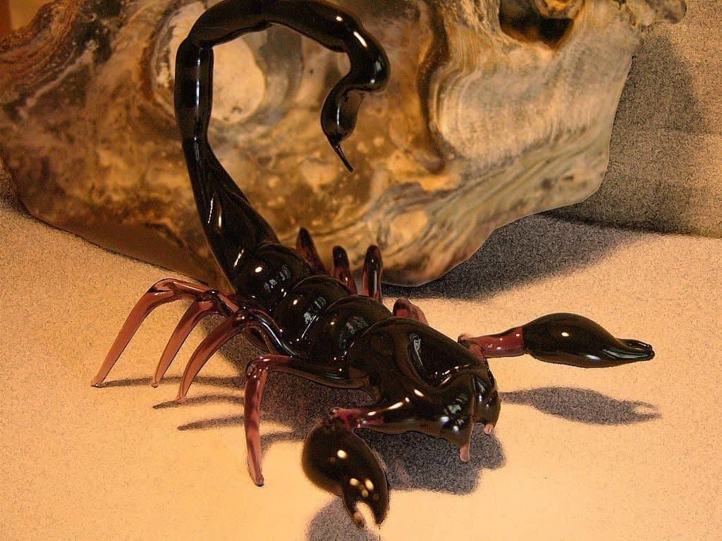 Скорпион – это животное или насекомое