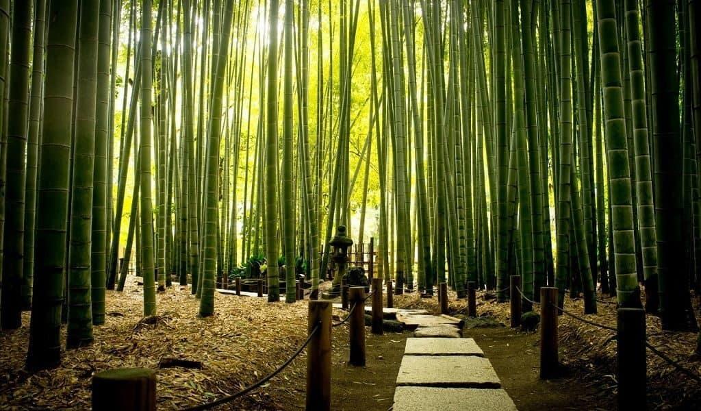 Китайский национальный парк «Океан бамбука»,