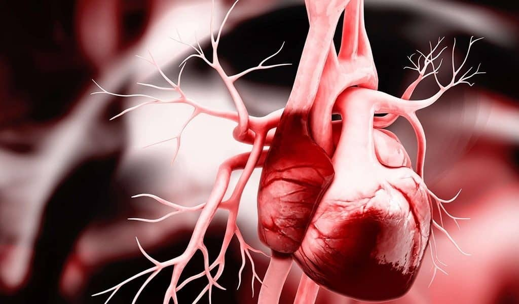 Человеческое сердце