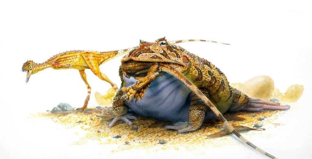 Прародители лягушки голиафа