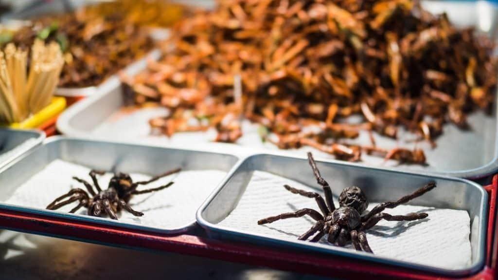 Жареные пауки