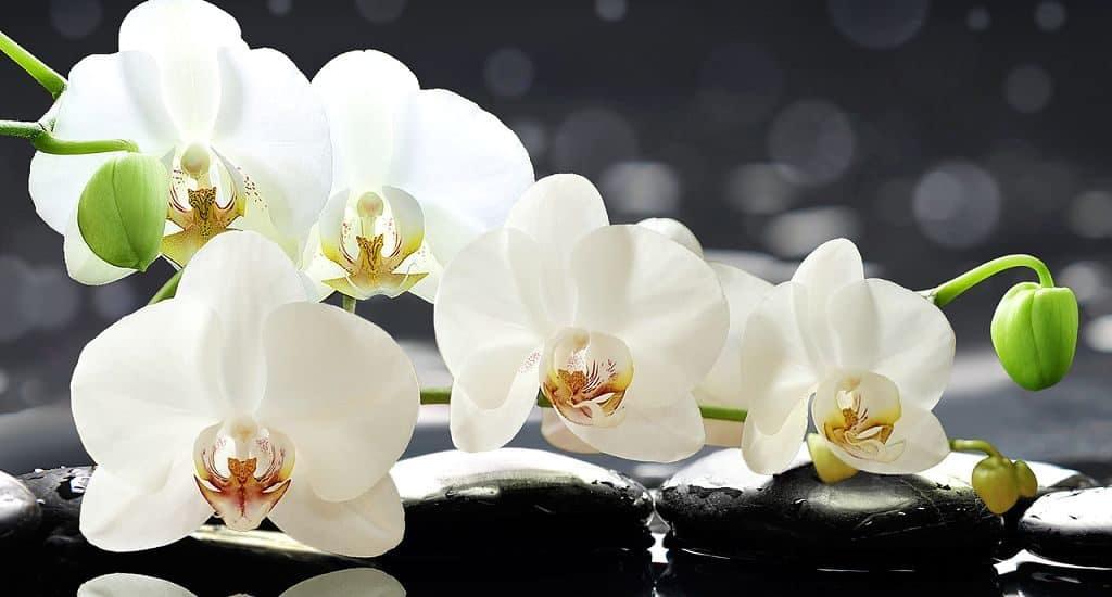 Орхидеи в Древнем Китае