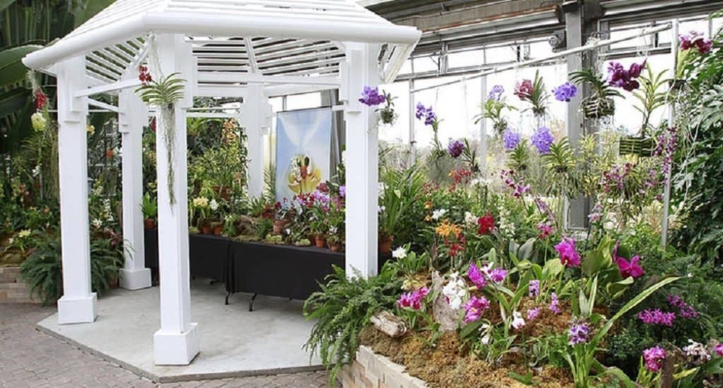 Орхидеи в оранжерее