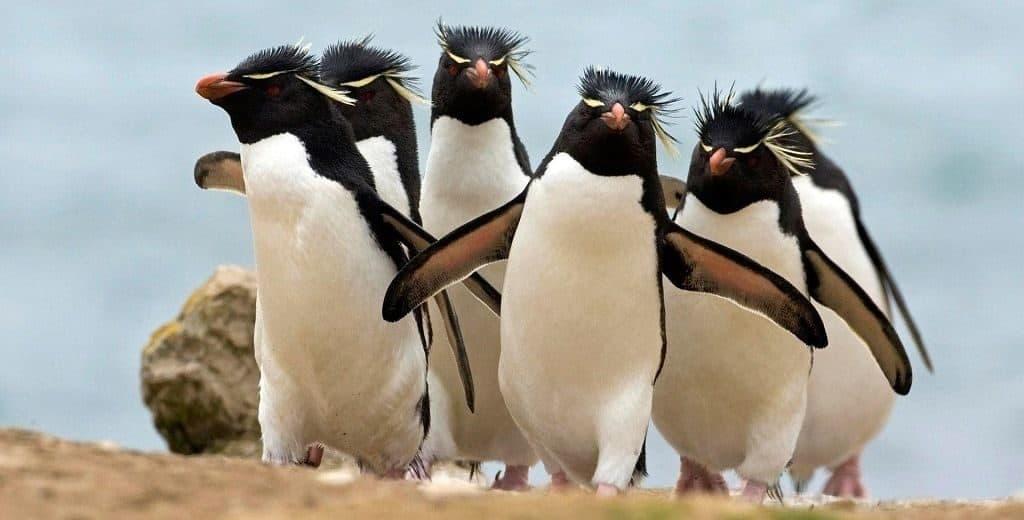 Пингвины - кто они