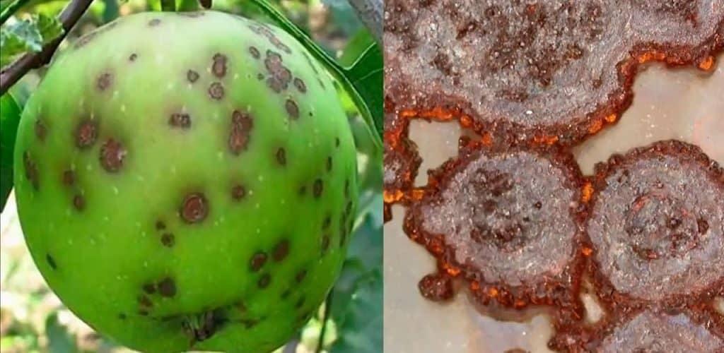 Грибки Penicillium, Cladosporium и Aspergillus