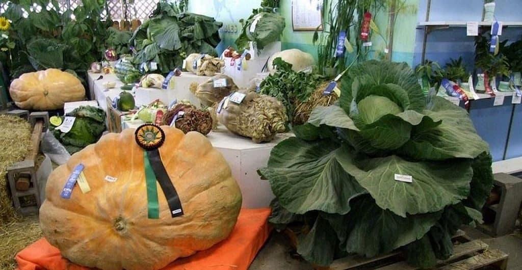 Овощи, выращенные на Аляске
