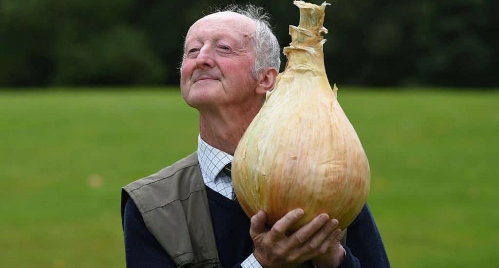 Гигантская луковица