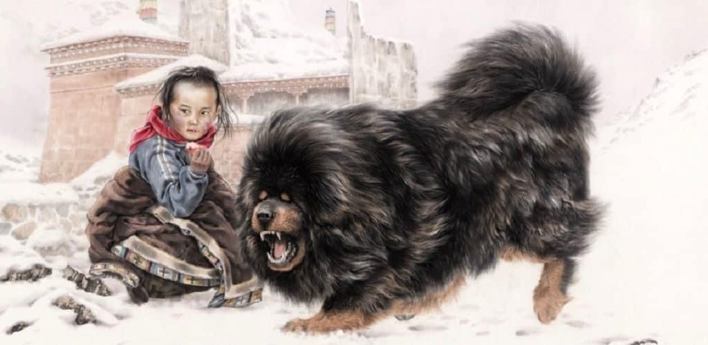 История появления тибетского мастифа