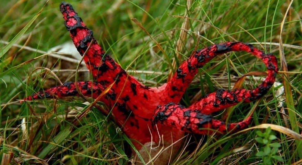 Рог осьминога