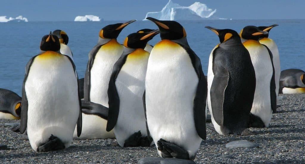 Сколько лет живут пингвины
