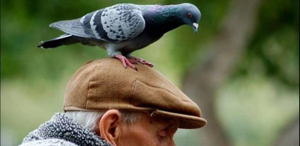 Примета: птичий помет на одежде