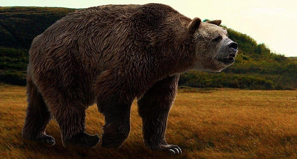 Доисторический южноамериканский коротконосый медведь