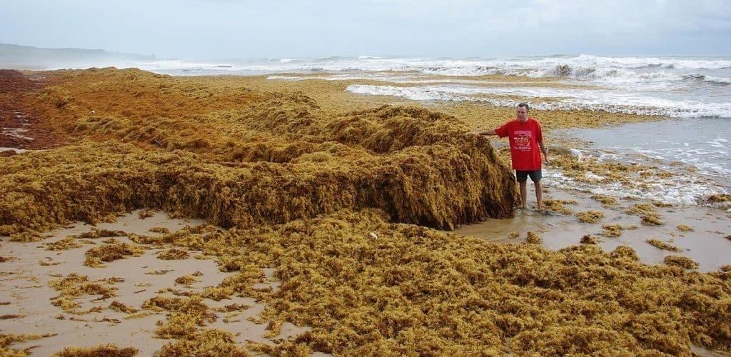Колонии водорослей