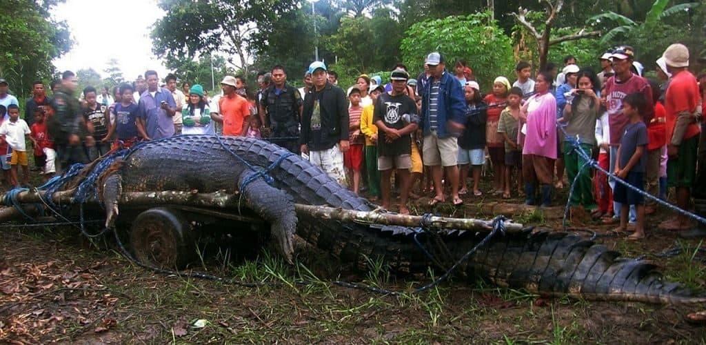 Крокодил по кличке Лолонг