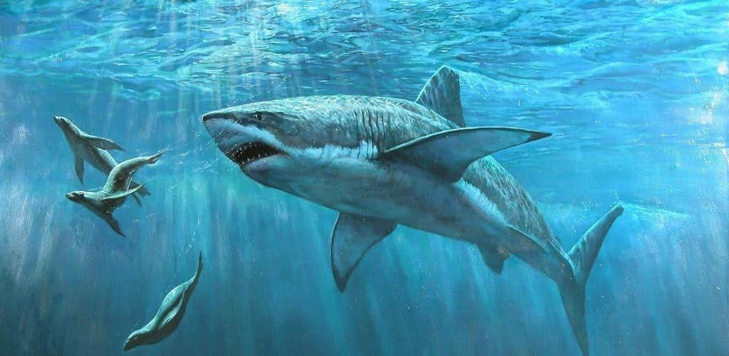 Большие и страшные акулы