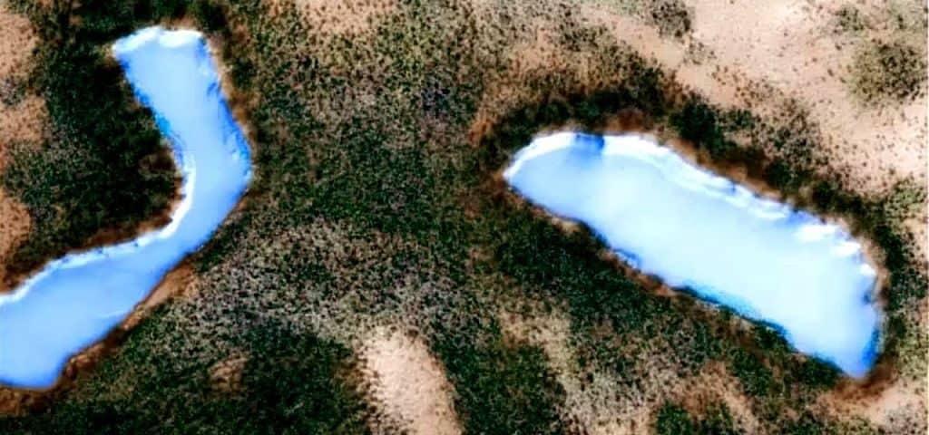Марсианские леса