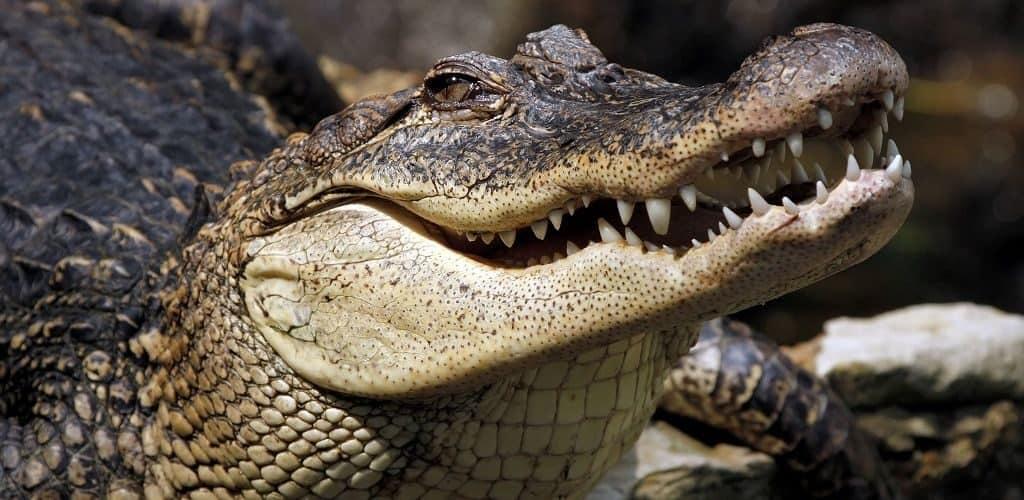 Строение тела крокодила