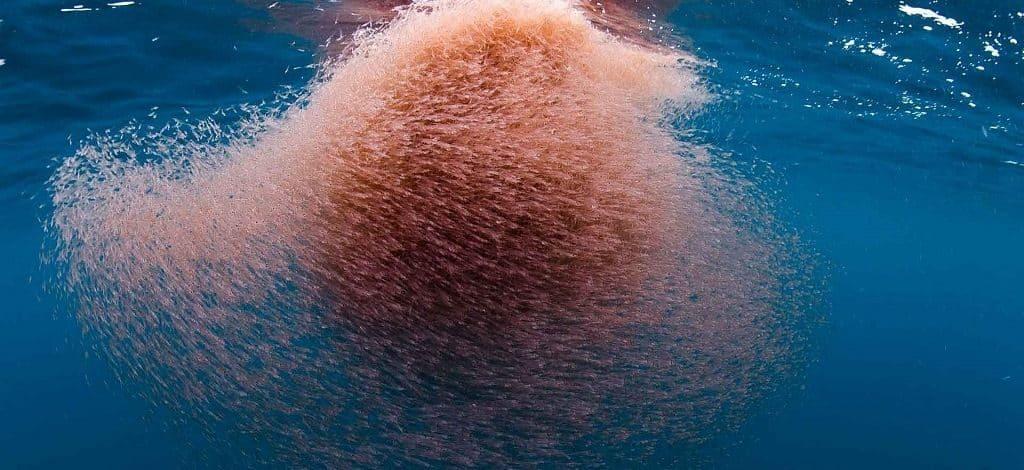 Криль в океане
