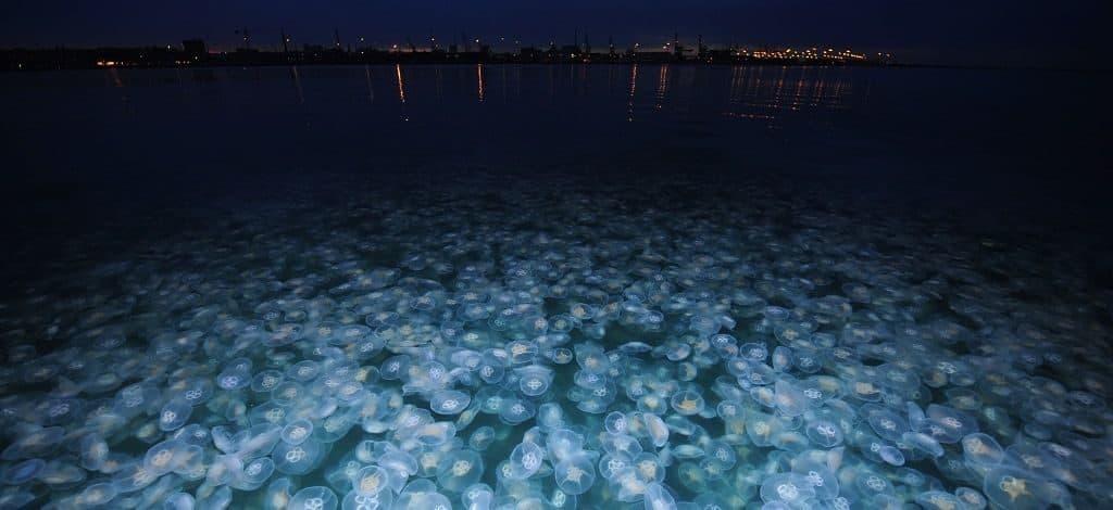 Планктон ночью