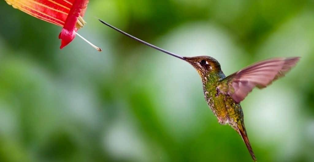 Удивительная колибри