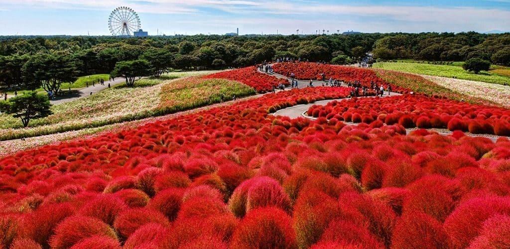 Парк Хитачи (Япония)