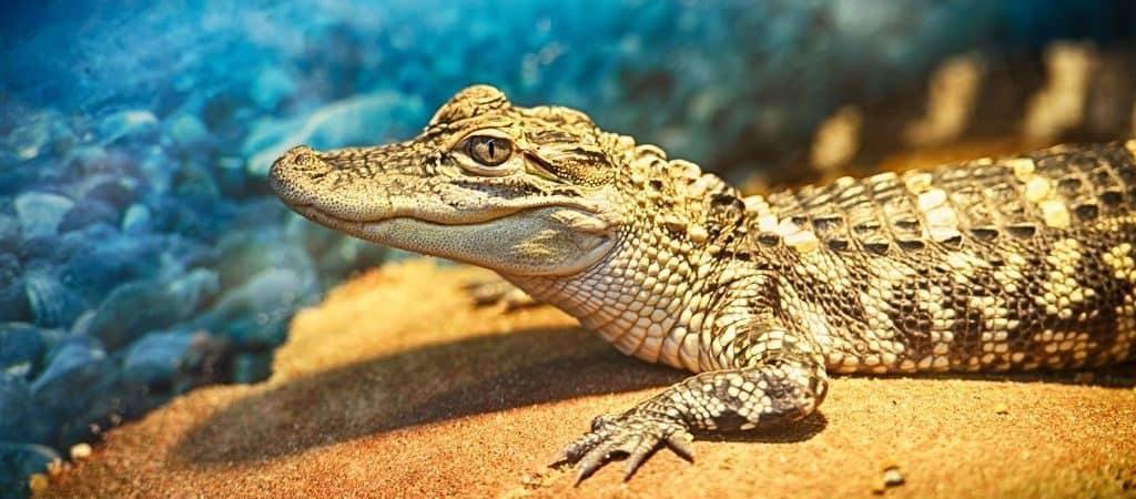 Виды крокодилов