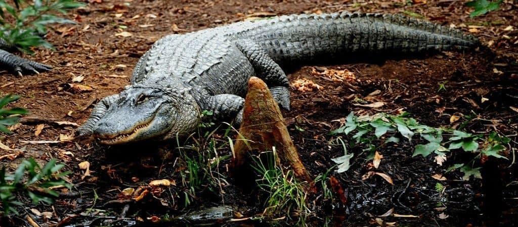 Места обитания крокодилов